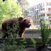 Эволюция экосистем: животные в городе