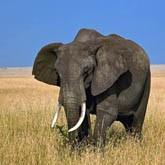 Самые большие сухопутные животные в мире