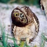 Забавные фотографии животных Джоан Вильямс