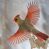 Птицы и животные в фотографиях Mircea Costina