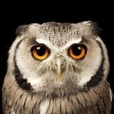 Mark Bridger: фотографии птиц и животных