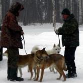 Выставка собак и охотничий биатлон на базе Дворянское гнездо