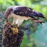 Лучшие работы фотоконкурса World Bird 2012