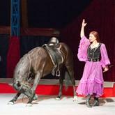 КСК Левадия приглашает в цирк и на соревнования по конкуру
