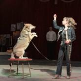 «Цирковой дивертисмент» 13 и 14 апреля
