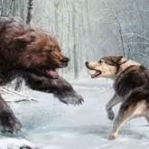 Состязания лаек по подсадному медведю и вольерному барсуку