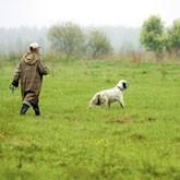 Cостязания легавых по полевой и водоплавающей птице пройдут в Новосибирске