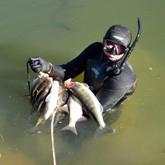 Региональные соревнования подводных охотников в первой декаде октября