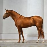 Международная конная ярмарка и конференция Эквирос Professional 2012