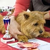 Евразия 2012: Выставка собак в Крокус Экспо