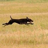 Региональные Межпородные состязания легавых по полевой дичи «Верное чутьё»
