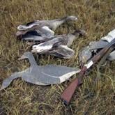 Открытие охоты 2012, истребление кабанов и забота об охотугодьях