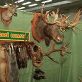 Охотничьи выставки в Иваново и Волгограде и запрет петлевой охоты