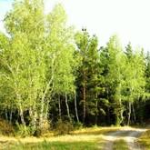 День работников леса отметили в России