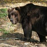 Голодные медведи, учет маралов и охота на Ямале