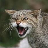 Охота в Беларуси: правила охоты, истребление лесных котов и чемпионат по манкам