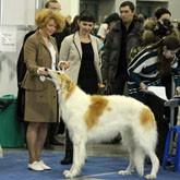 В Москве прошла крупнейшая выставка собак «Евразия-2013»