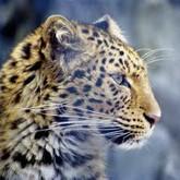 «Земля леопарда» и новые заповедники России
