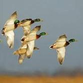 Натуралисты, браконьеры и сроки весенней охоты