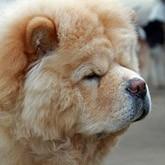 14-15 декабря - Новогодняя выставка-продажа щенков и собак в Национальном Конном Парке «РУСЬ»!
