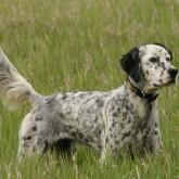 Приглашаем на конференцию «Современные проблемы охотничьего собаководства»