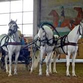 НКП «Русь» приглашает совершить конные прогулки на орловских рысаках