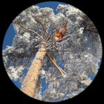Конкурс «Фотограф-натуралист-2010» завершён в Лондоне