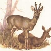 В Ленобласти ограничили число охотничьих трофеев