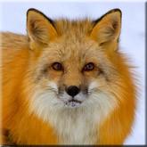 Сезон охоты открыт: где охотиться, на кого охотиться, как охотиться