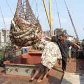 Браконьеры за лосося заплатят 115 тысяч рублей