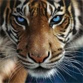 Борьба за сохранение тигров принципиальна для человечества = 331 млн. долларов
