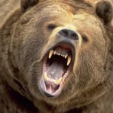 Медведь зашедший в столицу Тувы был бешеным