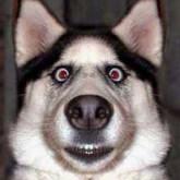 В рычании собаки закодированы данные о её размерах