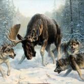 Февраль - Календарь Охотника