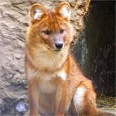 Приморский сафари-парк. Редкие животные вне клеток (ВИДЕО)