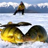 Подледная рыбалка. Вести  с водоемов (ВИДЕО)