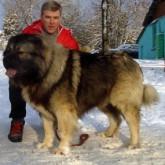 Принят закон Об ответственном обращении с животными