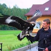 Всероссийские состязания ловчих птиц по голубю