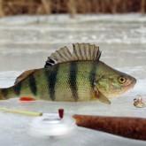 Горячая десятка отчетов о рыбалке