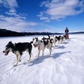 Финишировала самая длинная в Евразии гонка на собачьих упряжках