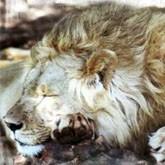 День свободы для львов и дайверов (видео)
