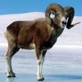 Алтайских браконьеров оправдал самый справедливый и гуманный суд в мире