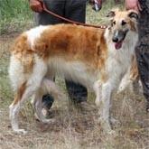 Выставки охотничьих и других собак в мае