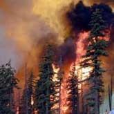 Леса горят под контролем