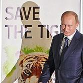Амурскому тигру расчищают просеку