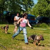 Выставки собак. Июнь 2011