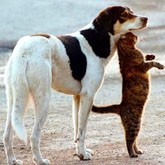 В Белгородской области нельзя держать больше трех домашних животных