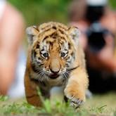 В зоопарках едят обитателей, борются с тиграми и ставят веб-камеры