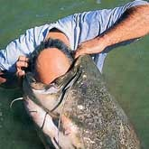 Рыболовные новости в конце июня