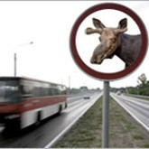 Лоси атакуют автомобили